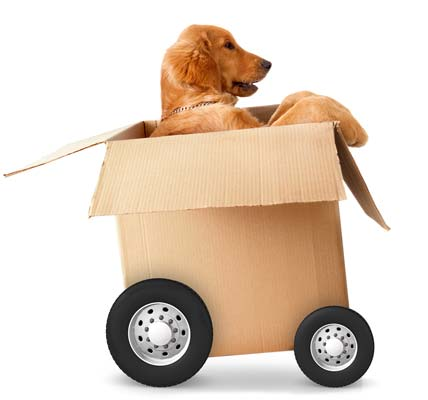 Dog in a moving box with wheels