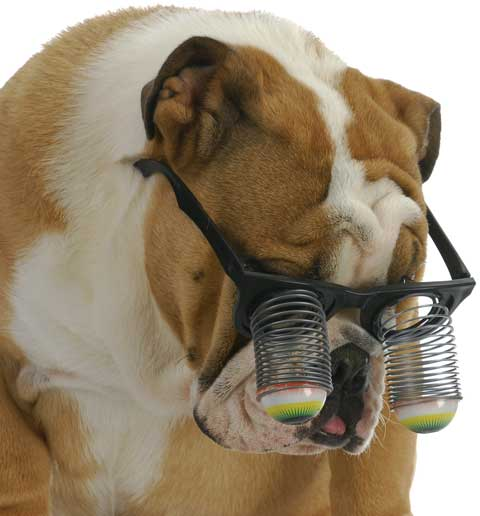 Dog with goofy glasses
